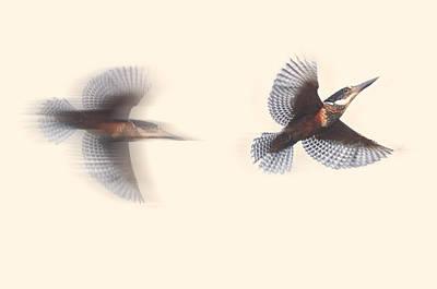 Maxima Wall Art - Photograph - Kingfisher by Christian Heeb
