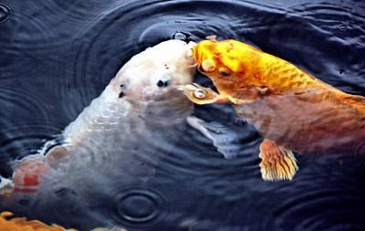 Nature Photograph - Kissin Cousins by Don Mann