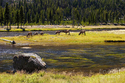 Grazing Elk Photograph - Kissing Elk by Keith Kapple