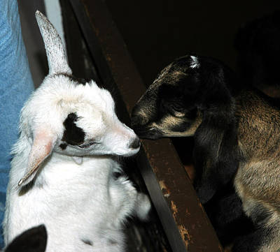 Wool Photograph - Kissing Kids by LeeAnn McLaneGoetz McLaneGoetzStudioLLCcom
