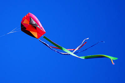 Photograph - Kite In A Winter's Sky by Harvey Barrison