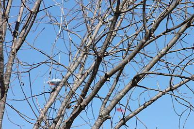 Photograph - Kite Tree by Janice T Keller-Kimball