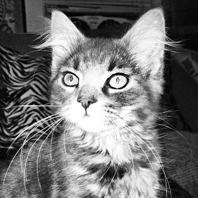 Kitten Art Print by Angela Garrison