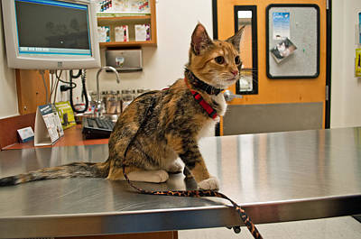 Photograph - Kitten At The Vet by Tikvah's Hope