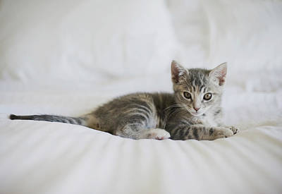 Kitten Art Print by Cindy Loughridge