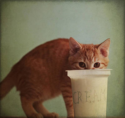 Kitten Eating From Big Pot Of  Cream Art Print by By Julie Mcinnes