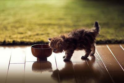 Persian Carpet Photograph - Kitten Investigating Miso Soup Bowl by Benjamin Torode