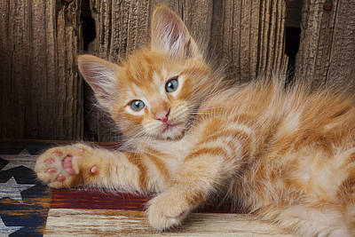 Photograph - Kitten Laying by Garry Gay