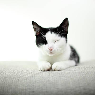 Eyes Closed Photograph - Kitten Sleeping by Marcel ter Bekke