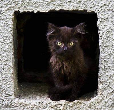 Photograph - Kitten by Svetlana Batalina
