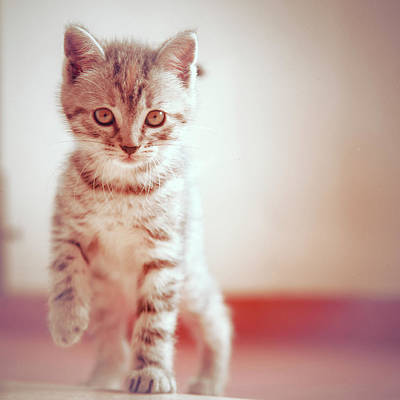 Kitten Walking On Floor Art Print by Alberto Cassani
