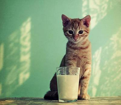 Kitten With Glass Of Milk Art Print by By Julie Mcinnes