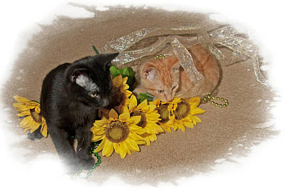 Art Print featuring the photograph Kittens And Sunflowers by Judy Deist