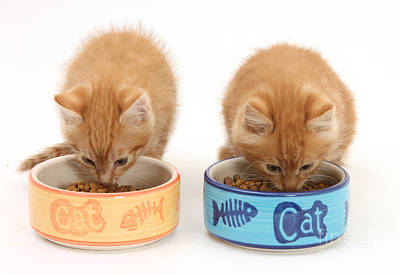 Photograph - Kittens Eating by Mark Taylor