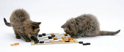 Photograph - Kittens Playing Checkers by Mark Taylor