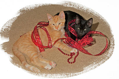 Kittens Ribbons And Beads Art Print by Judy Deist