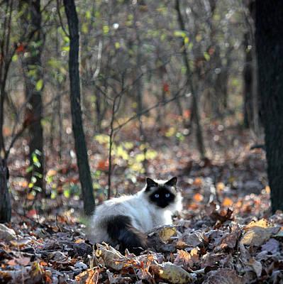 Kitty And Bokeh Art Print