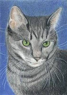 Drawing - Kitty Cat - Aceo by Ana Tirolese