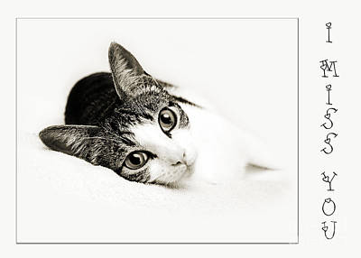 Cat Photograph - Kitty Cat Greeting Card I Miss You by Andee Design