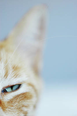 Kitty Art Print by Cindy Loughridge