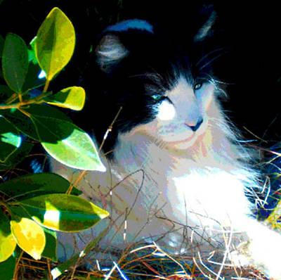 Painting - Kitty Hideaway by Elinor Mavor
