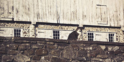 Photograph - Kitty On Guard by Trish Tritz