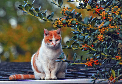 Photograph - Kitty On The Roof by Margaret Palmer