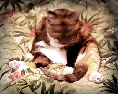 Photograph - Kitty Says No by Tom Buchanan