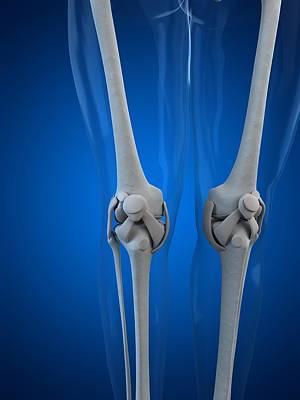 Human Joint Digital Art - Knee Anatomy, Artwork by Sciepro