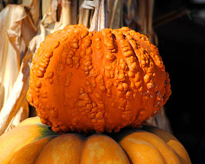 Photograph - Knotty Pumpkin by Jai Johnson