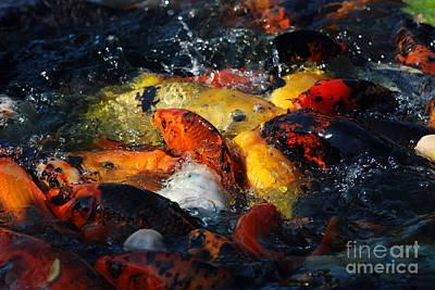 Art Print featuring the photograph Koi Fish by Eva Kaufman