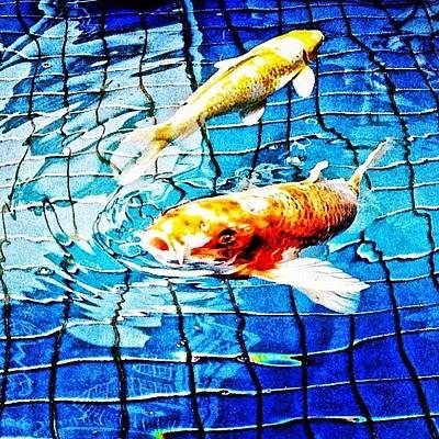 Koi Fish Photograph - #koi #fishes by Cynthia Lanting