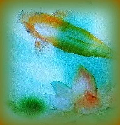 Painting - Koi  Mood  Soft Today by Wendy Wiese