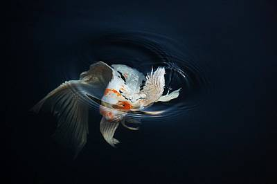 Butterfly Koi Digital Art - Koi Rising In The Moonlight by Don Mann