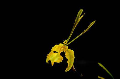 Photograph - Kramerianum by Chua  ChinLeng