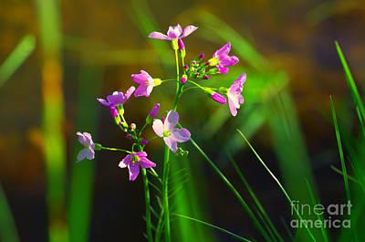 Violett Photograph - Kuckucksblume by Tanja Riedel