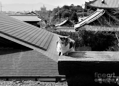 Photograph - Kyoto Kat by Dean Harte