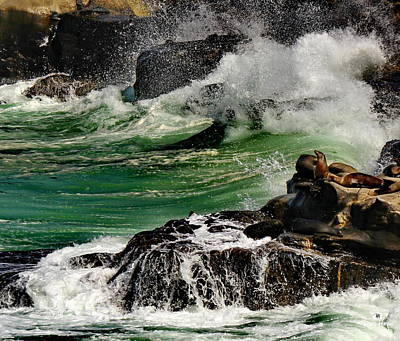 Childrens Pool Photograph - La Jolla Seal Rock by Russ Harris