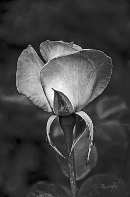 Photograph - La Rose Noire by Cheri Randolph