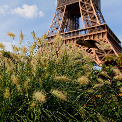 Paris Photograph - La Tour Eiffel by Anna A. Krømcke
