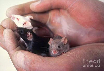Lab Mice Art Print