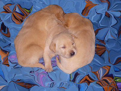 Baby Animal Photograph - Lab Pups 2 by Aimee L Maher Photography and Art Visit ALMGallerydotcom
