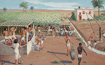 Laborers Harvest Grapes And Press Art Print by H.M. Herget
