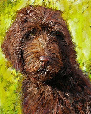 Retriever Digital Art - Labradoodle by Jane Schnetlage