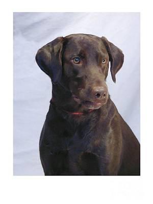Retriever Digital Art - Labrador Retriever 127 by Larry Matthews
