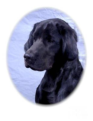 Retrievers Digital Art - Labrador Retriever 227 by Larry Matthews
