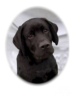 Retriever Digital Art - Labrador Retriever 504 by Larry Matthews