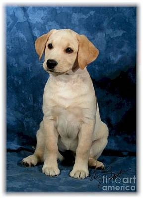 Retrievers Digital Art - Labrador Retriever Yellow Pup by Maxine Bochnia