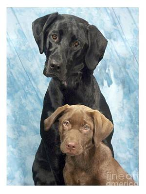 Retriever Digital Art - Labrador Retrievers 645 by Larry Matthews