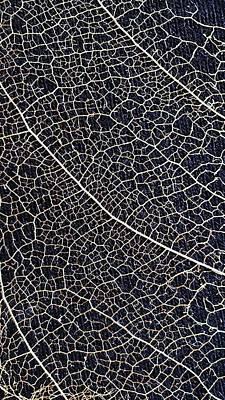 Lace Leaf 5 Art Print